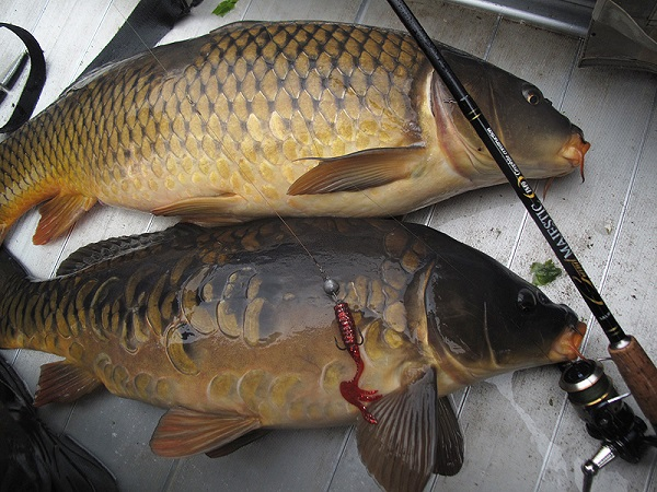 карп рыбная ловля