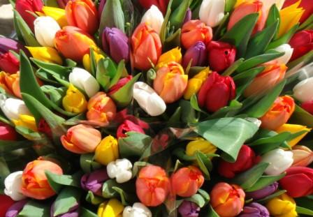 Характеризовать данные тюльпаны