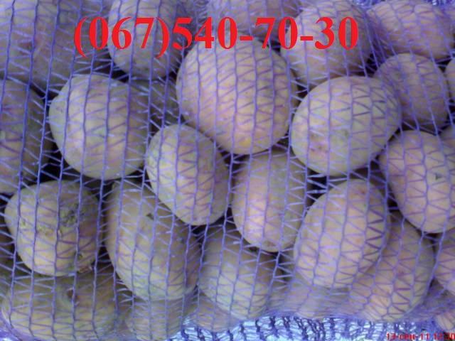 Контактный телефон.  Продам семенной картофель.  Первой РЕПРОДУКЦИИ нет.