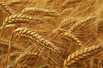 Экспорт зерновых из Украины заметно снизился
