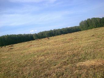 Стоимость гектара земли будет максимум $ 1 тыс.